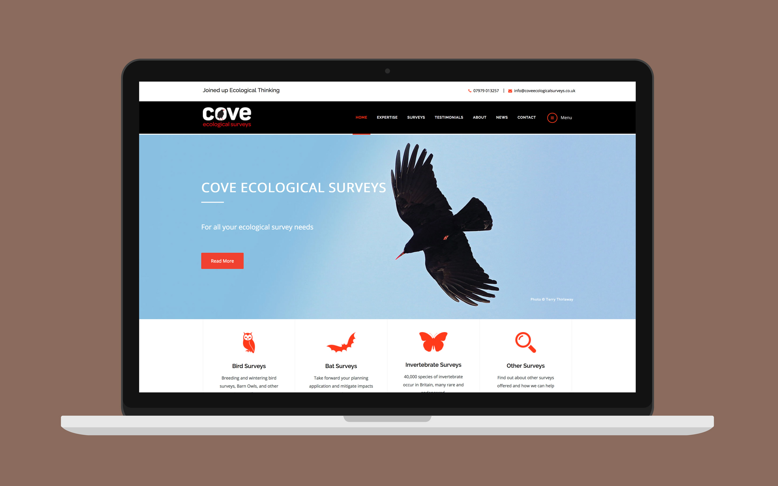 cove-ecology-1